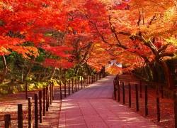 Nhật Bản Mùa Lá ..