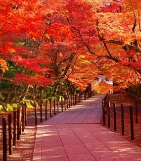 Nhật Bản Mùa Lá Đỏ..