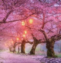 Yêu Nhật Bản đâu chỉ bởi mùa xuân