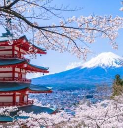 Vẻ đẹp Núi Phú Sĩ Bốn Mùa (Hoa Anh Đào Mùa Xuân)